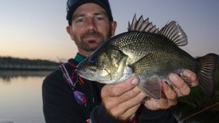 Australian Bass On Fly